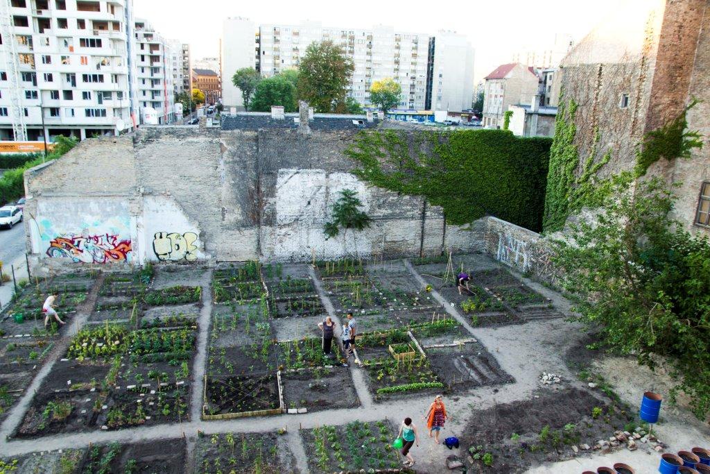 KÉK Közösségi kertek